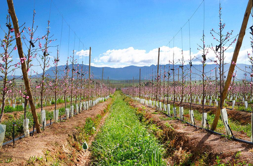 Hortfin Orchard Establishment 1024 672
