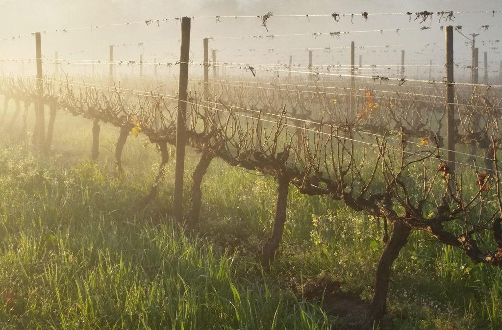 Hortfin Vineyard Dawn